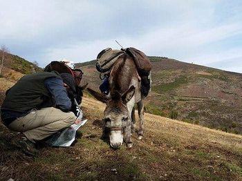 Cévennes avec âne